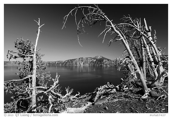 Lake and Mount Scott framed by Whitebark pines on top of Wizard Island cinder cone. Crater Lake National Park (black and white)