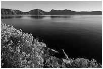 Rabbitbrush in late summer, Cleetwood Cove. Crater Lake National Park ( black and white)