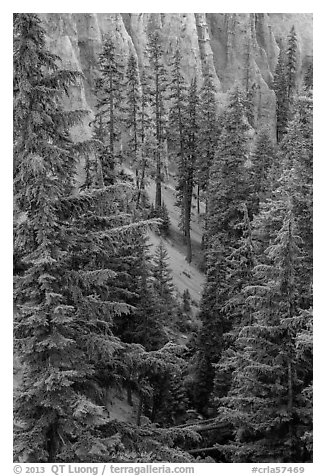 Hemlock in Munson Creek canyon. Crater Lake National Park (black and white)