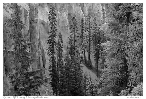 Hemlock and spires of fossilized ash in Munson Creek canyon. Crater Lake National Park (black and white)