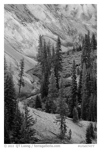 Junction of Munson Creek and Annie Creek at Godfrey Glen. Crater Lake National Park (black and white)