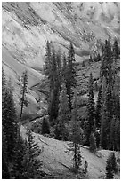 Junction of Munson Creek and Annie Creek at Godfrey Glen. Crater Lake National Park ( black and white)