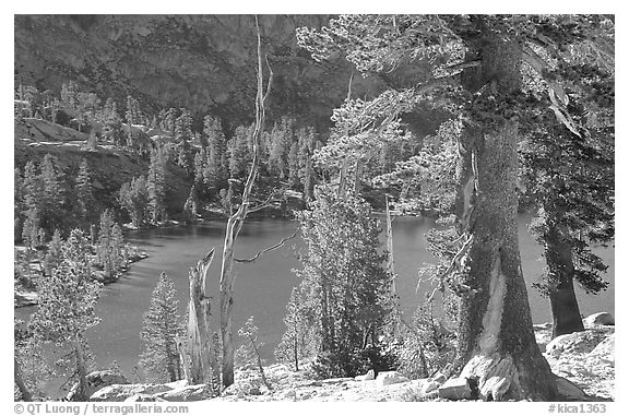 Pines and Rae Lake. Kings Canyon National Park (black and white)