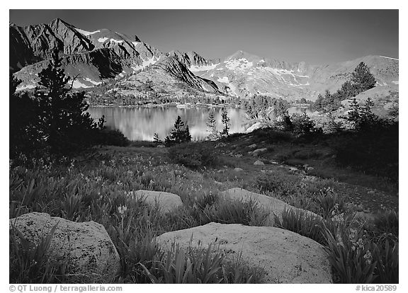 Woods lake and wildflowers, morning. Kings Canyon National Park (black and white)
