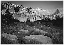 Woods lake and wildflowers, morning. Kings Canyon National Park, California, USA. (black and white)