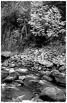 South Fork of  Kings River in autumn,  Giant Sequoia National Monument near Kings Canyon National Park. California, USA (black and white)
