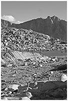 Deer in alpine terrain, Dusy Basin, afternoon. Kings Canyon National Park ( black and white)