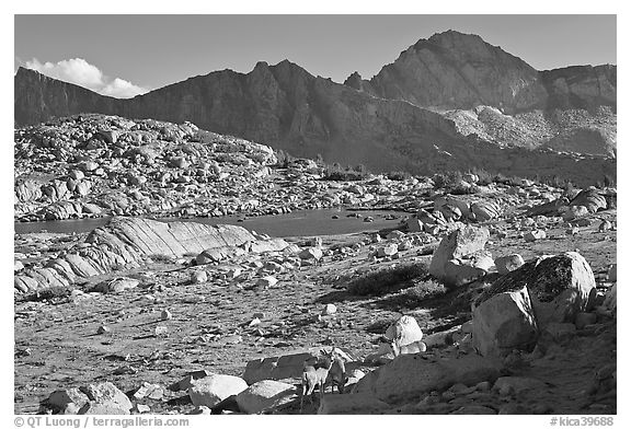 Deer, boulders, alpine lake, and mountains, Dusy Basin. Kings Canyon National Park (black and white)