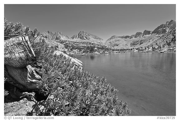 Wood stump and lake, Lower Dusy Basin. Kings Canyon National Park (black and white)