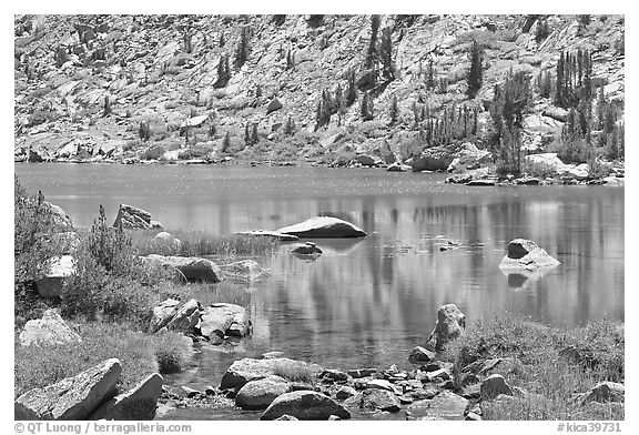 Lake and tree reflections, Lower Dusy Basin. Kings Canyon National Park (black and white)