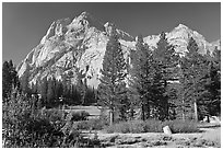 Langille Peak and pine trees, Big Pete Meadow, Le Conte Canyon. Kings Canyon National Park, California, USA. (black and white)