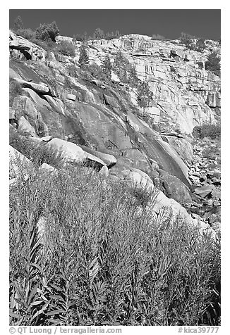 Fireweed and waterfall. Kings Canyon National Park (black and white)