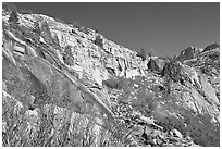 Fireweed and cliffs with waterfall. Kings Canyon National Park, California, USA. (black and white)