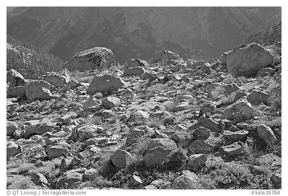 Boulders in meadow above Le Conte Canyon. Kings Canyon National Park (black and white)