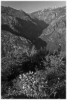 Flowers and Middle Forks of the Kings River. Kings Canyon National Park ( black and white)