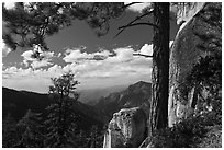 Pine and outcrops, Lookout Peak. Kings Canyon National Park, California, USA. (black and white)