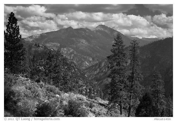 Peaks and trees from Cedar Grove rim. Kings Canyon National Park (black and white)