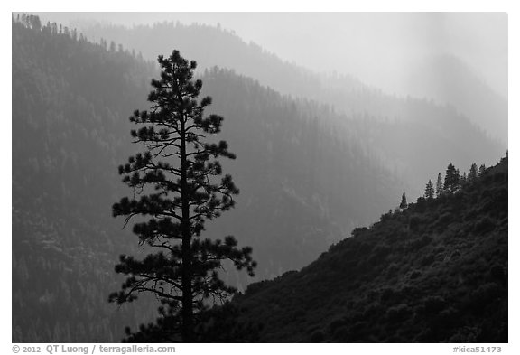 Silhouetted tree and canyon ridges. Kings Canyon National Park (black and white)