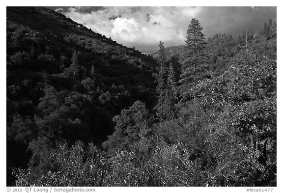 Lewis Creek. Kings Canyon National Park (black and white)