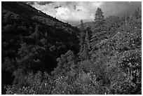 Lewis Creek. Kings Canyon National Park ( black and white)