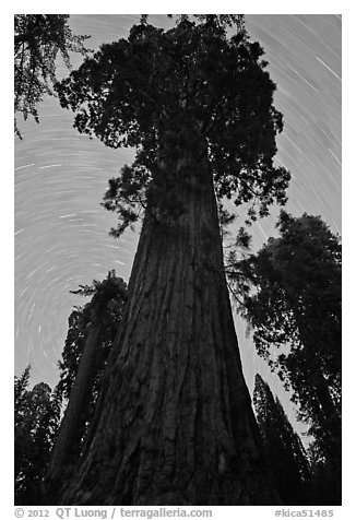 Sequoia and star trails, Grant Grove. Kings Canyon National Park (black and white)