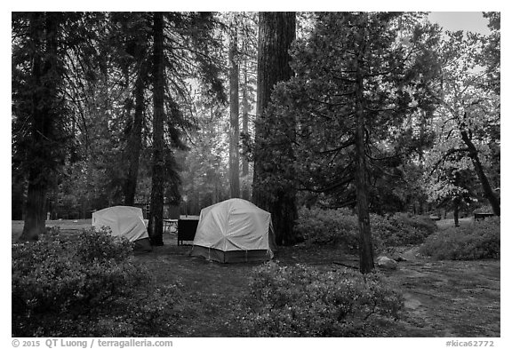 Azalea Campground. Kings Canyon National Park (black and white)