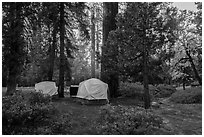 Azalea Campground. Kings Canyon National Park ( black and white)