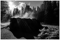 Sun, Fog rising from Mark Twain Stump. Kings Canyon National Park ( black and white)