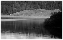 Butte Lake. Lassen Volcanic National Park ( black and white)