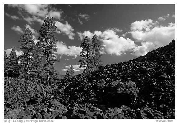 Pines on Fantastic lava beds. Lassen Volcanic National Park (black and white)