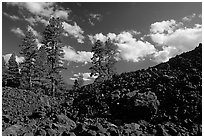 Pines on Fantastic lava beds. Lassen Volcanic National Park ( black and white)
