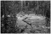 Kings Creek, meadow and forest. Lassen Volcanic National Park ( black and white)