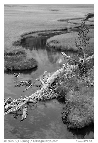 Fallen tree, stream, and meadow. Lassen Volcanic National Park (black and white)