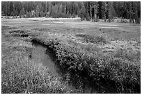Stream in tree-bordered meadow. Lassen Volcanic National Park ( black and white)