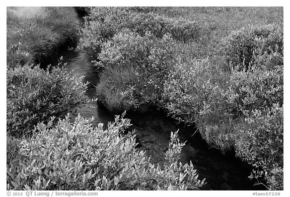 Shrubs and stream, late summer. Lassen Volcanic National Park (black and white)