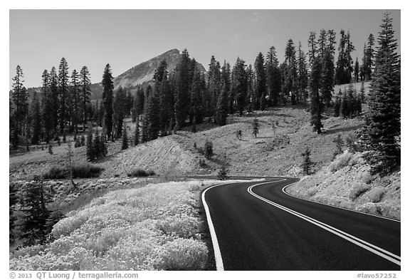 Road passing by Rabbitbrush in bloom. Lassen Volcanic National Park (black and white)