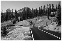 Road passing by Rabbitbrush in bloom. Lassen Volcanic National Park ( black and white)