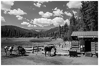 Corral, Drakesbad. Lassen Volcanic National Park ( black and white)