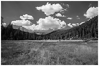 Drakesbad meadow, Warner Valley. Lassen Volcanic National Park ( black and white)