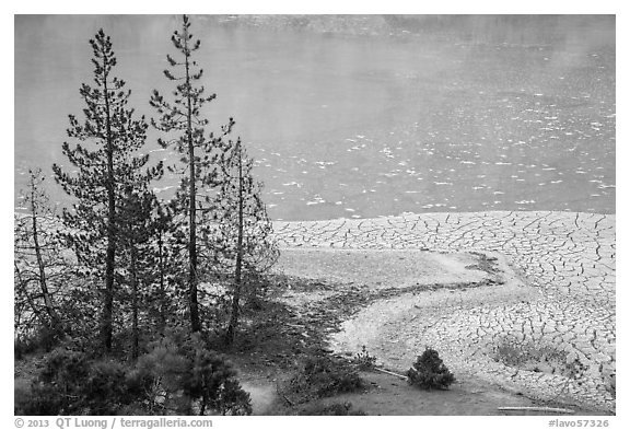 Trees and cracked mud, Boiling Springs Lake. Lassen Volcanic National Park (black and white)