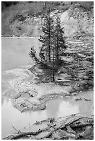 Shore of Boiling Springs Lake. Lassen Volcanic National Park ( black and white)