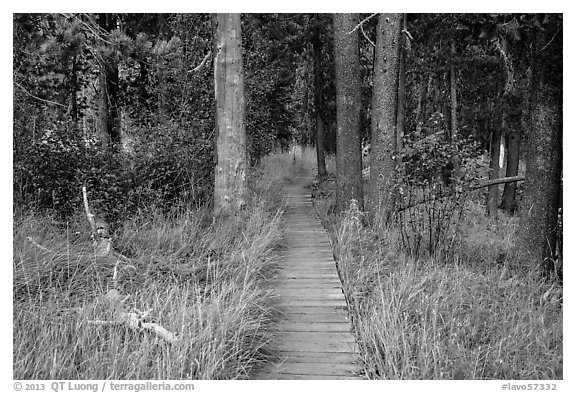 Boardwalk in meadow, Hot Springs Creek. Lassen Volcanic National Park (black and white)