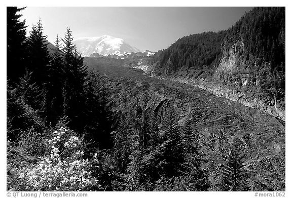 Mt Rainier above debris-covered Carbon Glacier. Mount Rainier National Park (black and white)