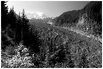 Mt Rainier above debris-covered Carbon Glacier. Mount Rainier National Park, Washington, USA. (black and white)
