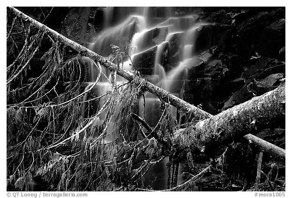 Waterfall in  Carbon rainforest area. Mount Rainier National Park (black and white)