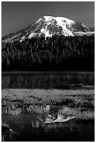 Mt Rainier reflected in Reflection lake, early morning. Mount Rainier National Park, Washington, USA. (black and white)