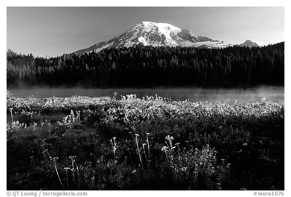 Carpet of summer flowers, Reflection Lake, and Mt Rainier, sunrise. Mount Rainier National Park (black and white)
