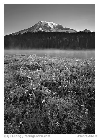 Wildflowers, Reflection Lake, and Mt Rainier, sunrise. Mount Rainier National Park (black and white)