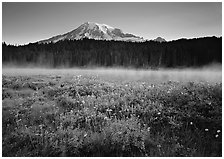 Wildflowers, Reflection Lake with fog raising, and Mt Rainier, sunrise. Mount Rainier National Park, Washington, USA. (black and white)