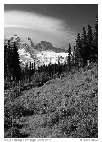 Meadow below Mount Rainier caped by cloud. Mount Rainier National Park (black and white)